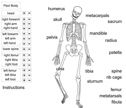 flexible skeleton  u2013 animated science
